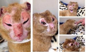 russel kucing malang 300x183 - Kucing Malang ini Bernama Russel