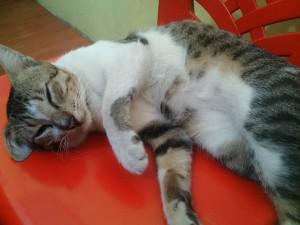 mpus tidur 300x225 - Kelakuan Aunty Pecinta Kucing Ini Patut ditiru