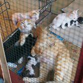 wpid 10014545 703013663135796 6710060863868000341 n - Shelter Swasembada di Sidoarjo ini Punya 129 ekor Kucing