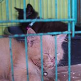 wpid 11024794 703013549802474 2208402832892026504 n - Shelter Swasembada di Sidoarjo ini Punya 129 ekor Kucing