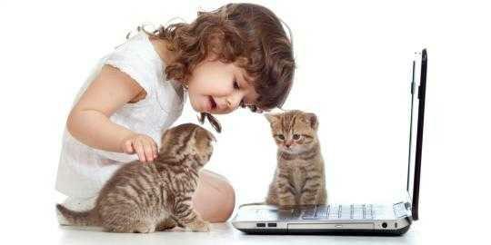 wpid 20150522154734 - Keuntungan & Kerugian Memelihara Kucing