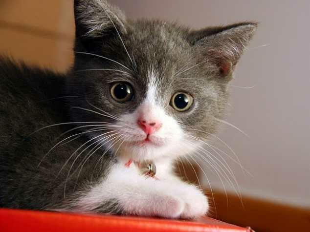 wpid 20150523190312 - Karakteristik Mata Kucing
