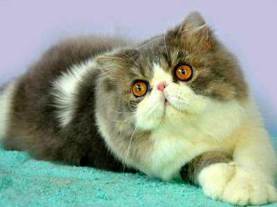 wpid 20150603024504 - Manusia, Tirulah Filosofi Kehidupan Kucing
