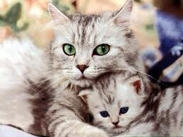 wpid cat baby.jpg - Manusia, Tirulah Filosofi Kehidupan Kucing