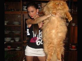 wpid gambar kucing gendut 09 - Jauhkan Kucing Lucu Anda dari Berat Berlebih