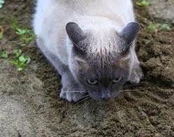 wpid kucing lucu boker.jpg - Manusia, Tirulah Filosofi Kehidupan Kucing