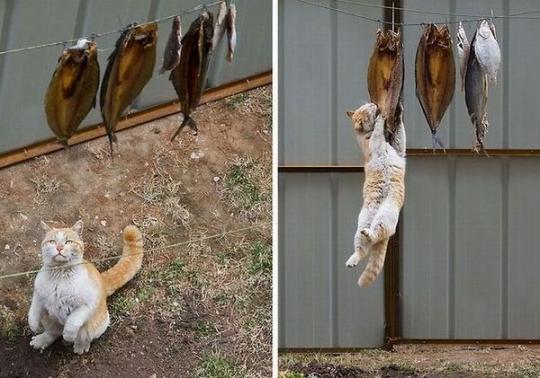 wpid kucing lucu mencuri.jpg - Manusia, Tirulah Filosofi Kehidupan Kucing