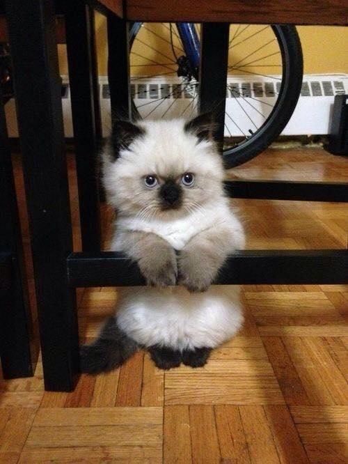 wpid kucing lucu.jpg - Manusia, Tirulah Filosofi Kehidupan Kucing