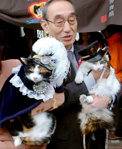 Tama (kiri), kucing maskot stasiun Kishi dan Nitama (kanan) calon pengganti kepala stasiun yang baru