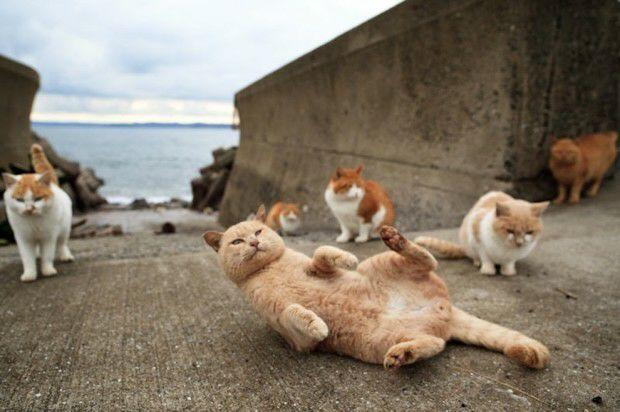 wpid 20150701081339 - Dea-Dea Island, Surganya para Kucing di Sulawesi Barat