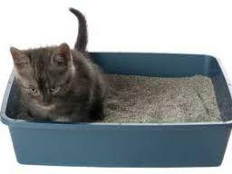 wadah khusus diperlukan sebagai tempat untuk anak kucing buang air besar dan buang air kecil