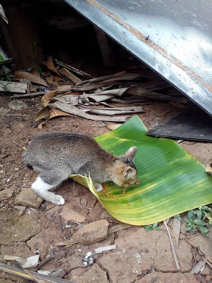wpid kucing kecemplung 3.jpg - Tercebur Sumur, Kucing Lucu ini Berhasil diselamatkan