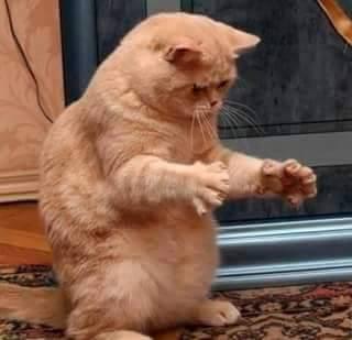wpid kucing lucu lucu.jpg - Kucing Mampu Melawan HIV