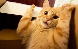 Jika dibiarkan, stres dapat berbahaya pada kucing.