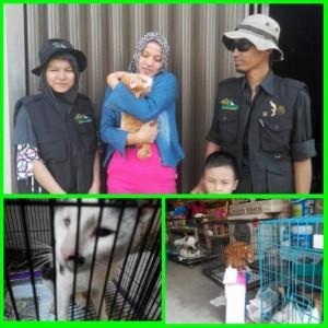 Unyu bersama Aunty Meyrina pemilik barunya. Kucing lucu ini dikirim langsung oleh Rumah Kucing dari Bandung ke Jogjakarta