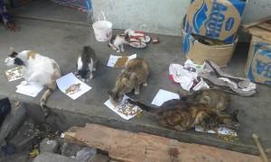 si mbah 2 300x180 - Yuk Bantu Si Mbah Penyayang Kucing ini