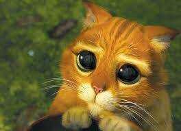 wpid mata kucing1.jpg - Hmm.. ini Arti kedipan pada kucing