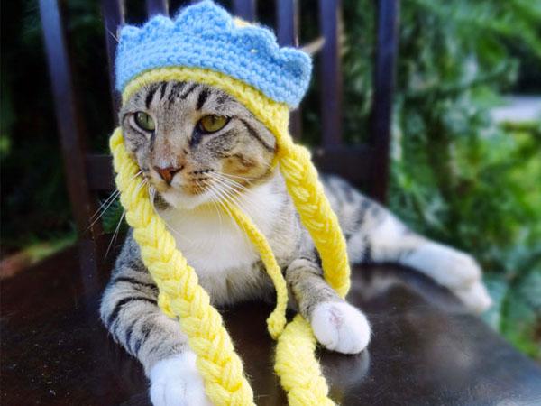 Topi lucu bisa membuat kucing kita menjadi lebih unyu dan menggemaskan