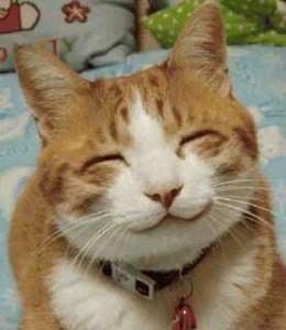 Kumis kucing, selain banyak manfaatnya ternyata bikin kucing terlihat lucu