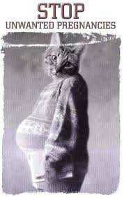 wpid wp 1443229412190 - Sterilisasi pada Kucing