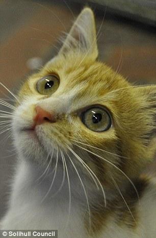 wpid wp 1444270324148 - Cairo, Kucing Penumpang Gelap Pemberani