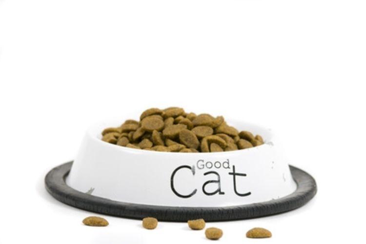 dry food - Jangan Sembarangan Memilih Dry Food ya Cat Lovers