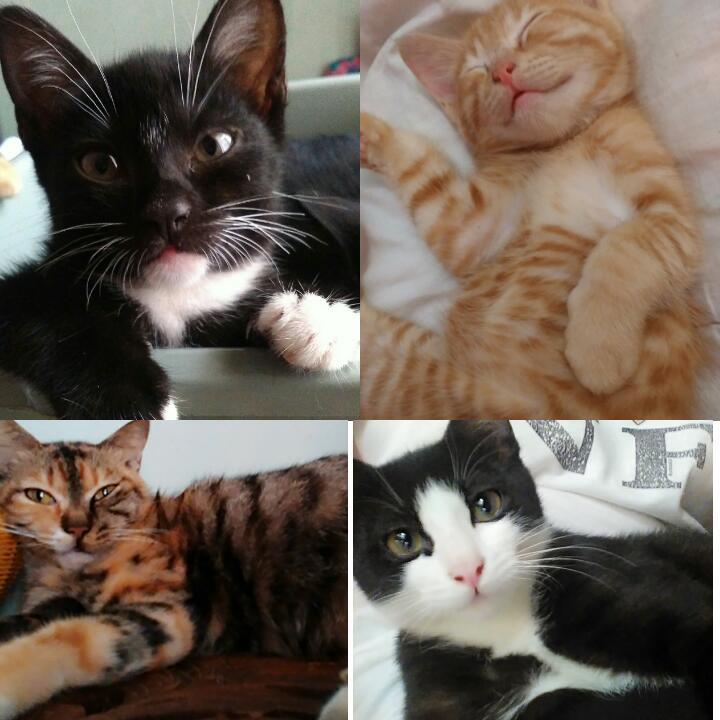 Kucing-kucing yang dipelihara oleh Aunty Andiena. Sangat terjaga kebersihannya dan terawat