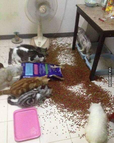 tragedi dry food - Jangan Sembarangan Memilih Dry Food ya Cat Lovers