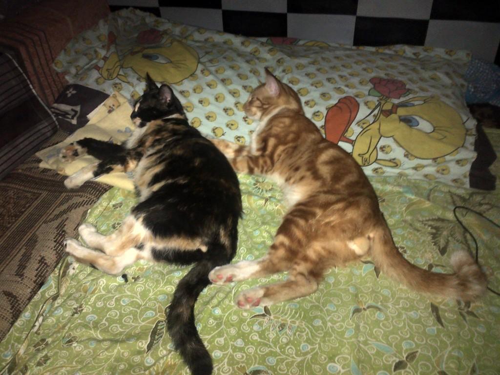 """Aunty Siezka: """"Bahagia itu sederhana melihat mereka tidur pules,sehat... Kiri: Ibu (umeng) & kanan: anak (simba)"""