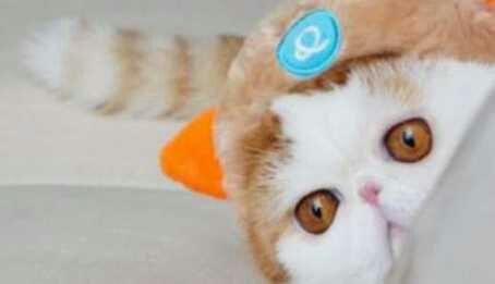 wpid snoopy01 - Snoopy, si Selebriti Kucing Lucu yang Menggemaskan