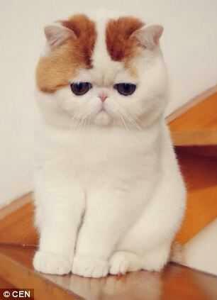 wpid snoopy1 - Snoopy, si Selebriti Kucing Lucu yang Menggemaskan