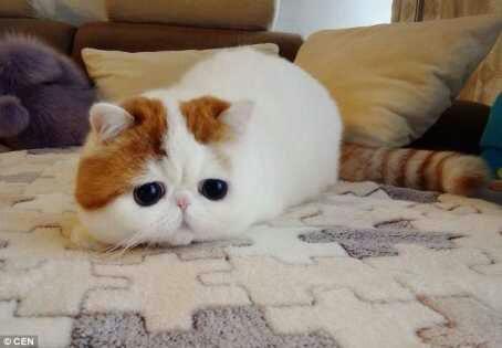 wpid snoopy21 - Snoopy, si Selebriti Kucing Lucu yang Menggemaskan
