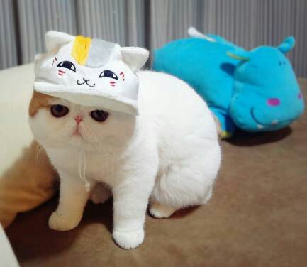 wpid snoopy31 - Snoopy, si Selebriti Kucing Lucu yang Menggemaskan