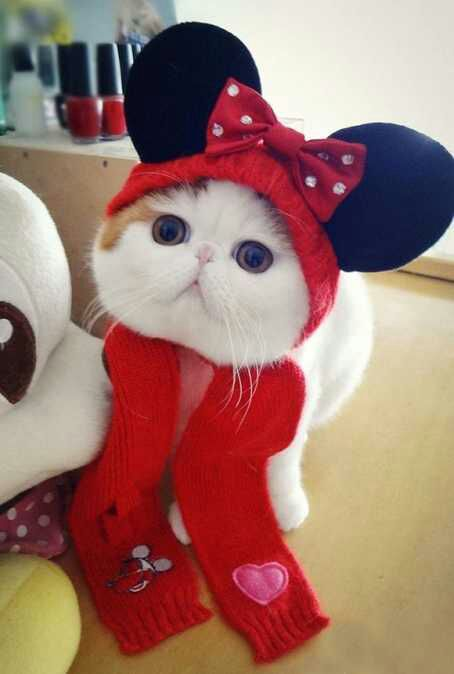 wpid snoopy41 - Snoopy, si Selebriti Kucing Lucu yang Menggemaskan
