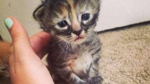 wpid wp 1451855686466 - Serem! Kucing Juga Bisa Mati Karena Rokok