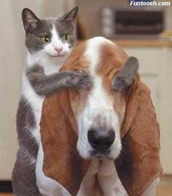 wpid wp 1451858299549 - Alasan dibalik Kucing Jarang Akur dengan Anjing
