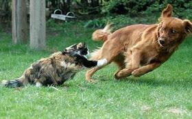 wpid wp 1451858323973 - Alasan dibalik Kucing Jarang Akur dengan Anjing