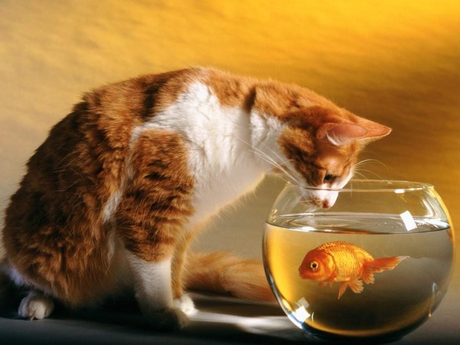 Tips 8 - 8 Cara Mudah Memotret Kucing Agar Mendapatkan Hasil yang Sempurna