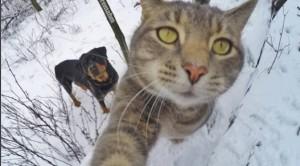 kerennya kucing selfi