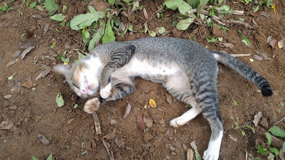 kucing bermain di pemakaman