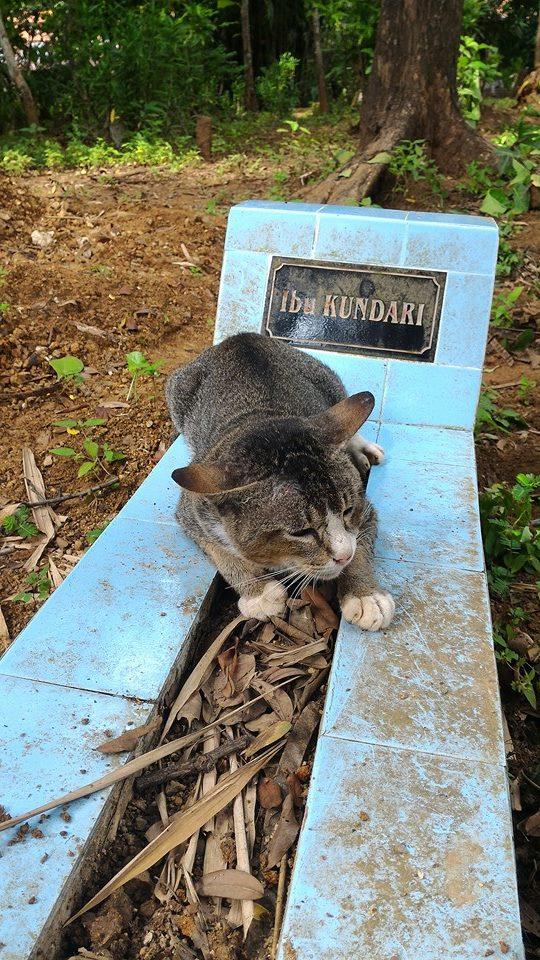 kucing di atas batu nisan
