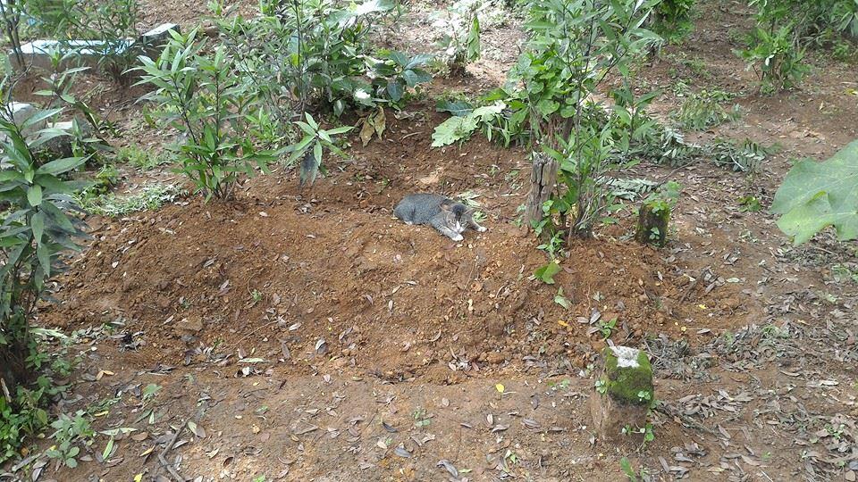 kucing menanti di kuburan