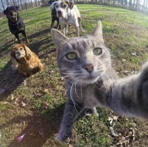 kucing sedang bergaya 300x298 - Manny, Kucing Kekinian Hobby Cekrek-Cekrek. Jago Mana Dibanding Kamu ?
