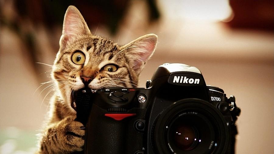 o1 - 8 Cara Mudah Memotret Kucing Agar Mendapatkan Hasil yang Sempurna