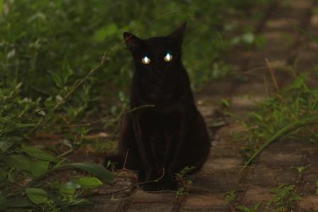 o2 - 8 Cara Mudah Memotret Kucing Agar Mendapatkan Hasil yang Sempurna