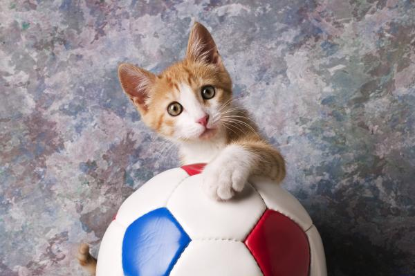 Tips 3: Berikan apa yang kucing anda suka