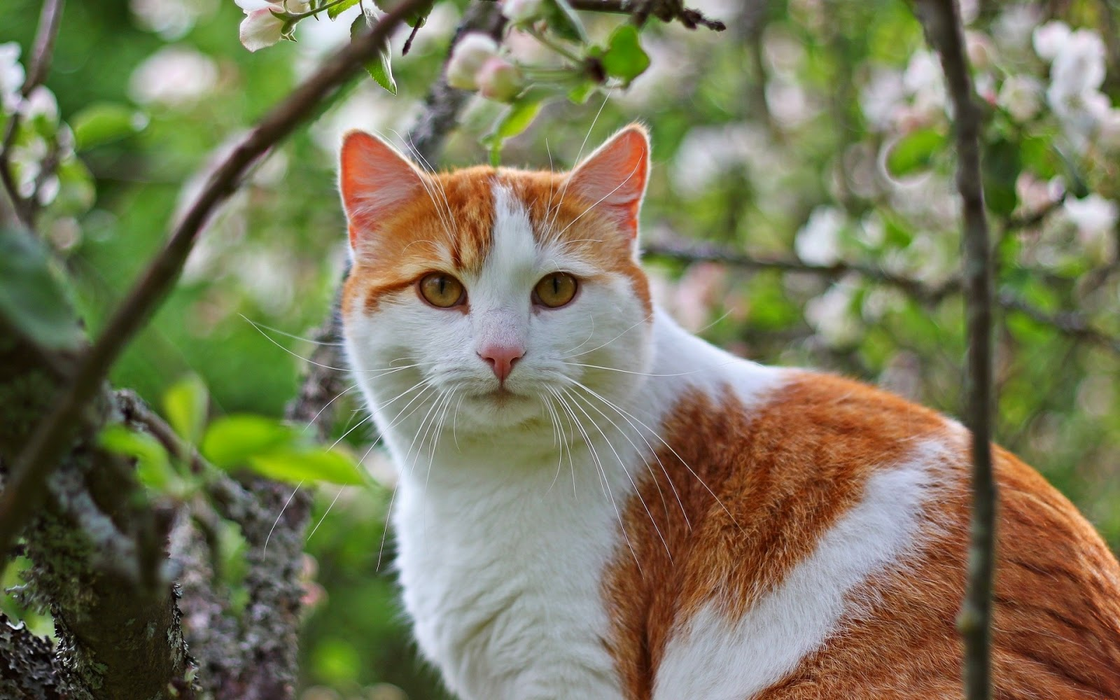 Tips 5: Buatlah suara-suara yang dapat menarik perhatian si kucing