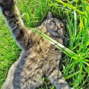 selfi di padang rumput 300x300 - Manny, Kucing Kekinian Hobby Cekrek-Cekrek. Jago Mana Dibanding Kamu ?