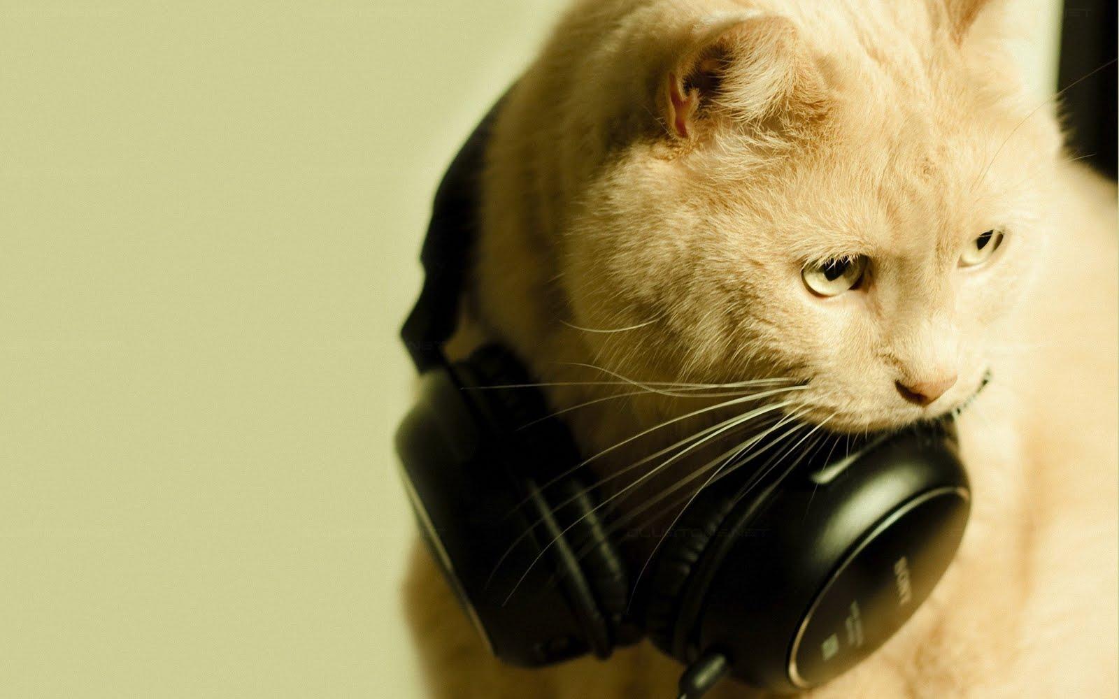 tips 6 - 8 Cara Mudah Memotret Kucing Agar Mendapatkan Hasil yang Sempurna