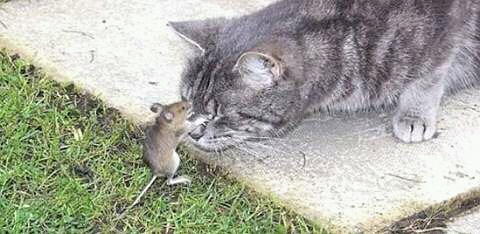 wpid wp 1455115764609 - Jangan Biarkan si Lucu Memakan Tikus